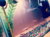 Продам аквариум 10 литров с крышкой