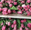 Тюльпаны к 8 марта 2017 оптом (Royal Ten)