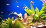 Красивый аквариум с живыми растениями